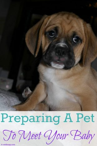 Preparing A Pet to Meet Your Baby