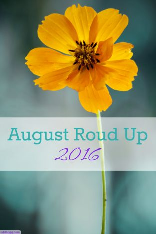 August round up 2016 - the highlights of what we've been up to this month oddhogg.com