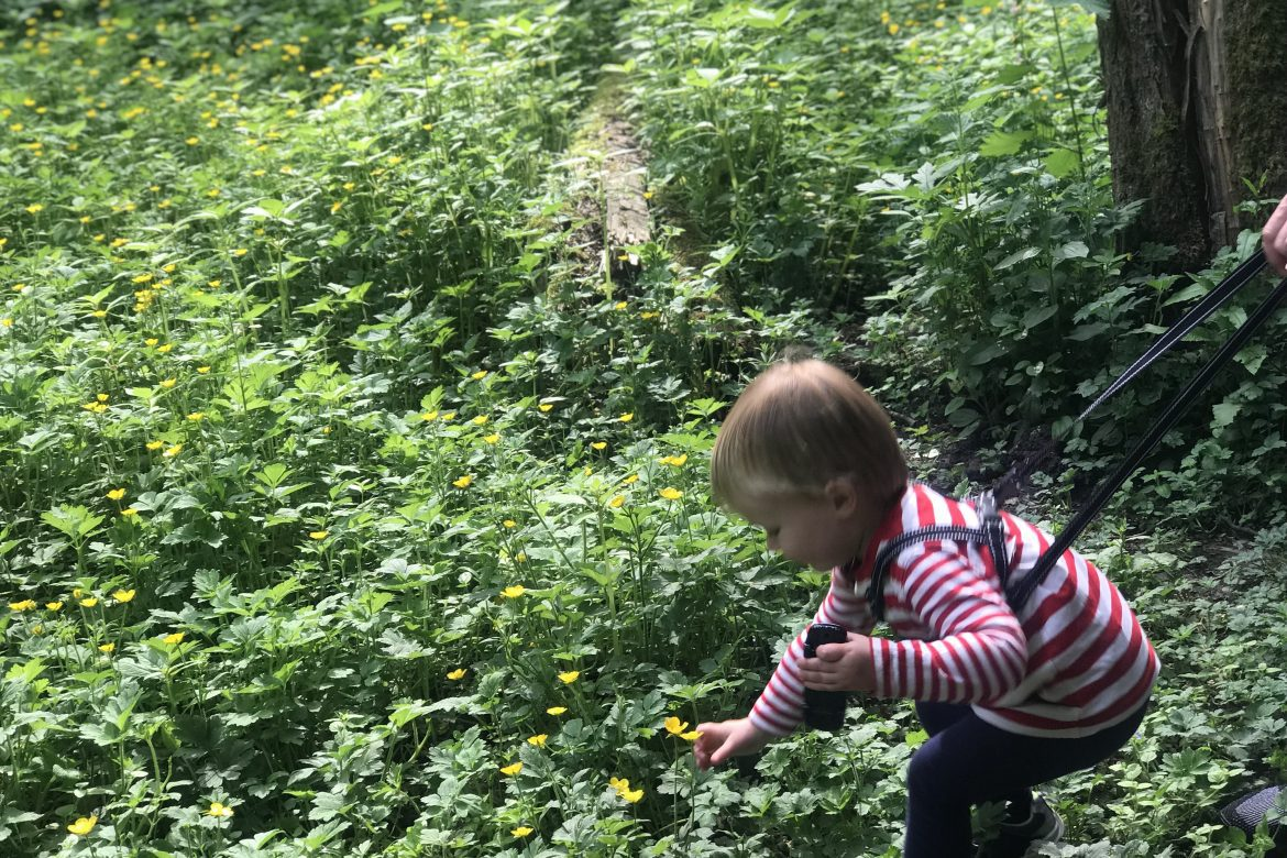 5 Things To Do In West Lancashire | A young boy explores some flowers in a fairy glen www.oddhogg.com