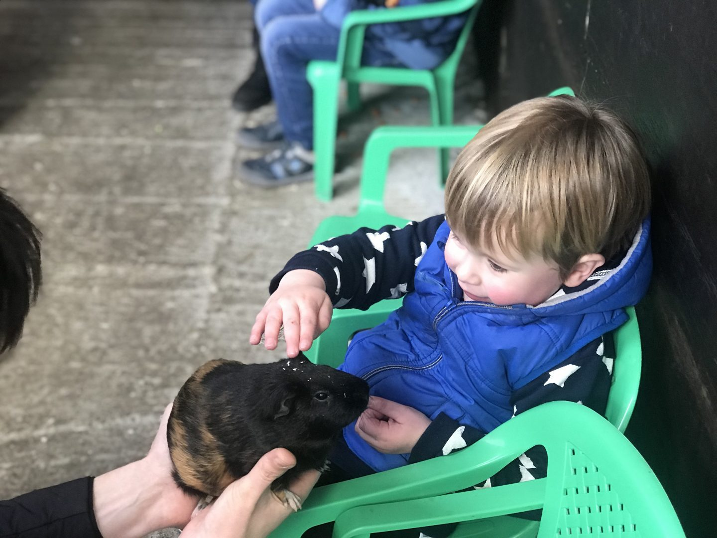 5 Things To Do In West Lancashire   A young boy sits in a green chair and pets a guinea pig. He is wearing a blue gilet www.oddhogg.com
