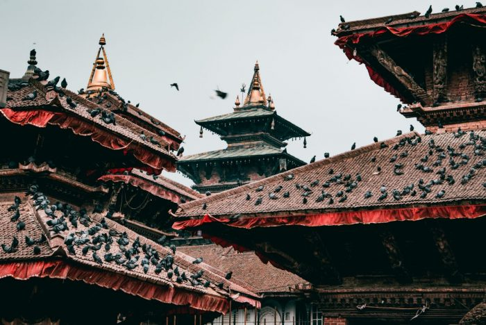Red and brown roofs in Nepal covered in birds